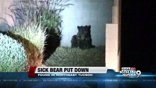 Bear spotted on the northeast side put done - Video
