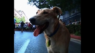 Sausage The Mad Rioting Dog - Video