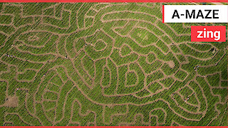 Incredible drone footage shows a giant 3ft maze in the shape of a sea turtle