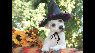 The Uzoo Gallery: Halloween Pet Costumes - Video