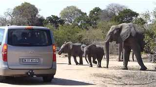Baby Elephant Shows Parked Car Who's Boss - Video