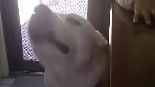 Talkative Dog Has Hysterical Conversation With Owner - Video