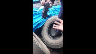 Workers Save Newborn Pup From Getting Crushed Under Heavy Tires - Video