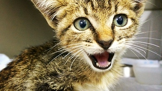 Permanently paralyzed kitten gets second chance at life - Video