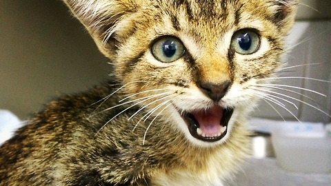 Permanently paralyzed kitten gets second chance at life