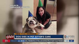 Dog dies in pet sitter's care - Video