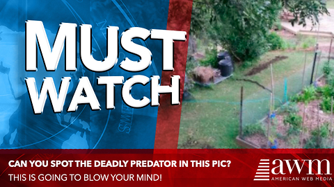 If You Only Had 5 Seconds To Spot Deadly Predator In Photo, Could You?