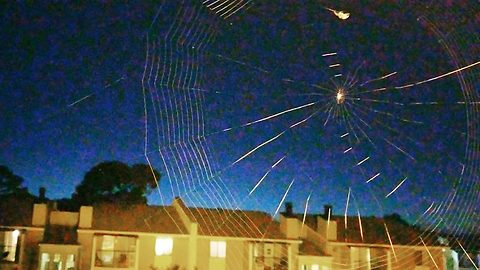 Mesmerising time lapse footage shows the moment a spider spins its own web