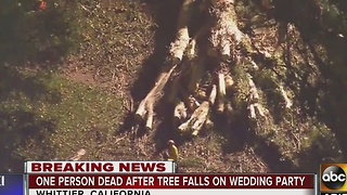 1 dead after tree falls on wedding party in California - Video