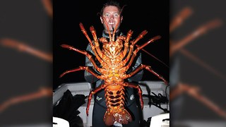 Giant Lobster: Biologist Discovers 70-Year-Old Crustacean - Video