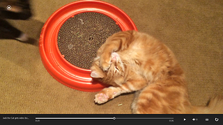 Cat gets video bombed by another cat while playing with catnip toy - Video