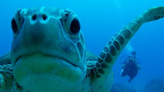 Breathtaking footage of earth's most ancient creatures