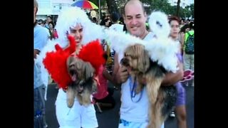 Doggy Carnival - Video