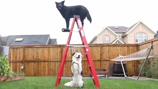 Spectacular dog tricks at iconic North American sights - Video