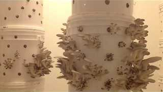 Two-Week Time-lapse of Oyster Mushroom Growth - Video