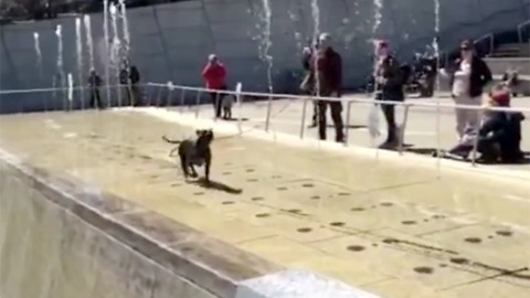 Adorably happy dog plays in the Brooklyn Museum fountain
