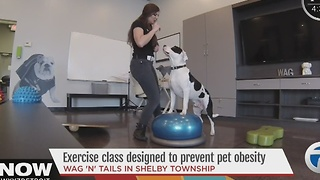 Exercise for pets - Video