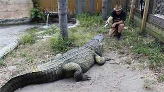 Gator Trainer Shares His Love of Star Wars With His Gators - Video
