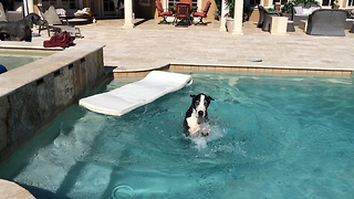 Katie the Great Dane floats swims and shakes - Video