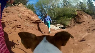 Rescued from a Kill shelter. Farley The Dog GoPro POV - Video