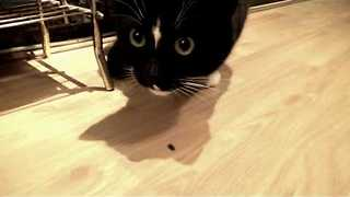 Confused Cat Investigates Unfortunate Woodlouse - Video
