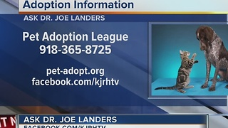 Dr. Joe visits midday to discuss pet health questions - Video