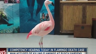 Competency hearing today in flamingo death case - Video