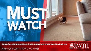 Bulldog Is Running For His Life, Then I Saw What Was Chasing Him And Can't Stop Laughing - Video