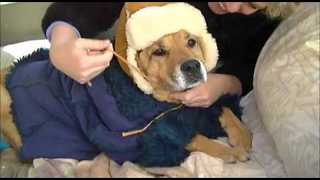 Dog Dressed in Adorable Winter Hat to Fight Freezing Weather - Video