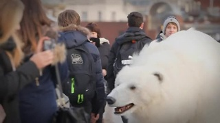 Giant polar bear roams streets of London - Video