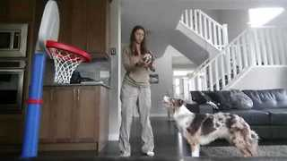 This Dog Has Mad Basketball Skills - Video