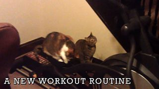 7 Cats Who Don't Care About Your New Year's Resolutions - Video