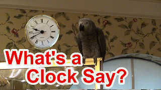 Einstein the Parrot tells you what a clock says