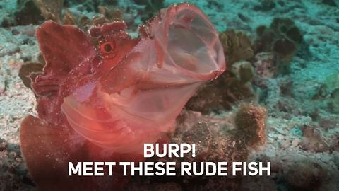 These are the rudest animals of the sea