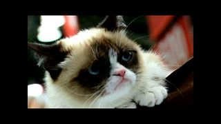 Grumpy Cat Releases A Book - Video