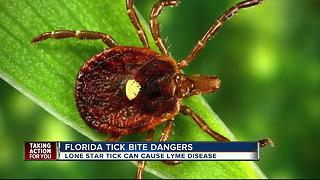 Lone Star Tick becoming active in Florida - Video