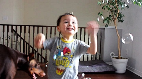 Toddler and Doberman go crazy for bubbles