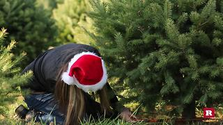 A Very Jewish Christmas: Cutting down a Christmas tree for the first time - Video
