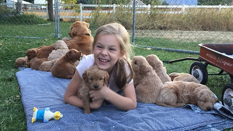 Little girl swarmed by litter of puppies