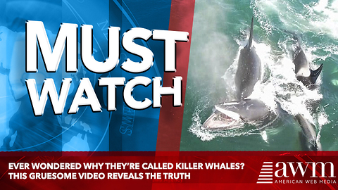 Ever Wondered Why They're Called Killer Whales? This Gruesome Video Reveals The Truth