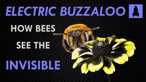 Electric Buzzaloo: How Bees See the Invisible