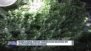 Fire concerns surround massive marijuana grow operation found in Ecorse - Video