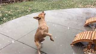 Excited Dog Experiences First Snowfall - Video