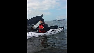 Kayaker's Extremely Close Encounter With Whale in Vancouver Bay - Video
