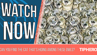 Try To Find The Cat That's Hiding Among These Owls - Video