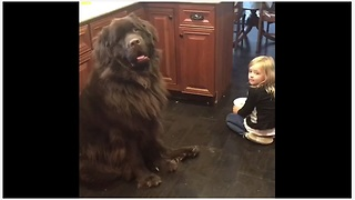 Dog doesn't seem to care about being scolded - Video