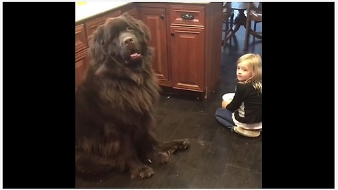 Dog doesn't seem to care about being scolded