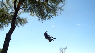 Baby baboon games: falling off a tree! - Video