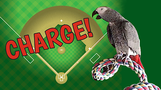 Parrot whistles the familiar ballpark charge tune