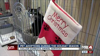 Adoptions, donations brighten holiday season for animal shelter